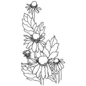 Catherine Scanlon Cling Mount Stamp - Daisies AGC3-2761