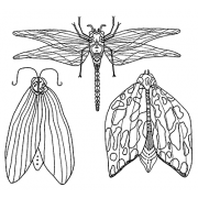Catherine Scanlon Cling Mount Stamp Set - Flying Insects CSCS-2795