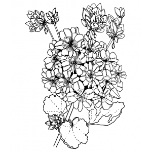 Catherine Scanlon Cling Mount Stamp: Geranium AGC2-2867