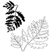 Catherine Scanlon Cling Mount Stamp Set - Fern Pair CSCS-2831